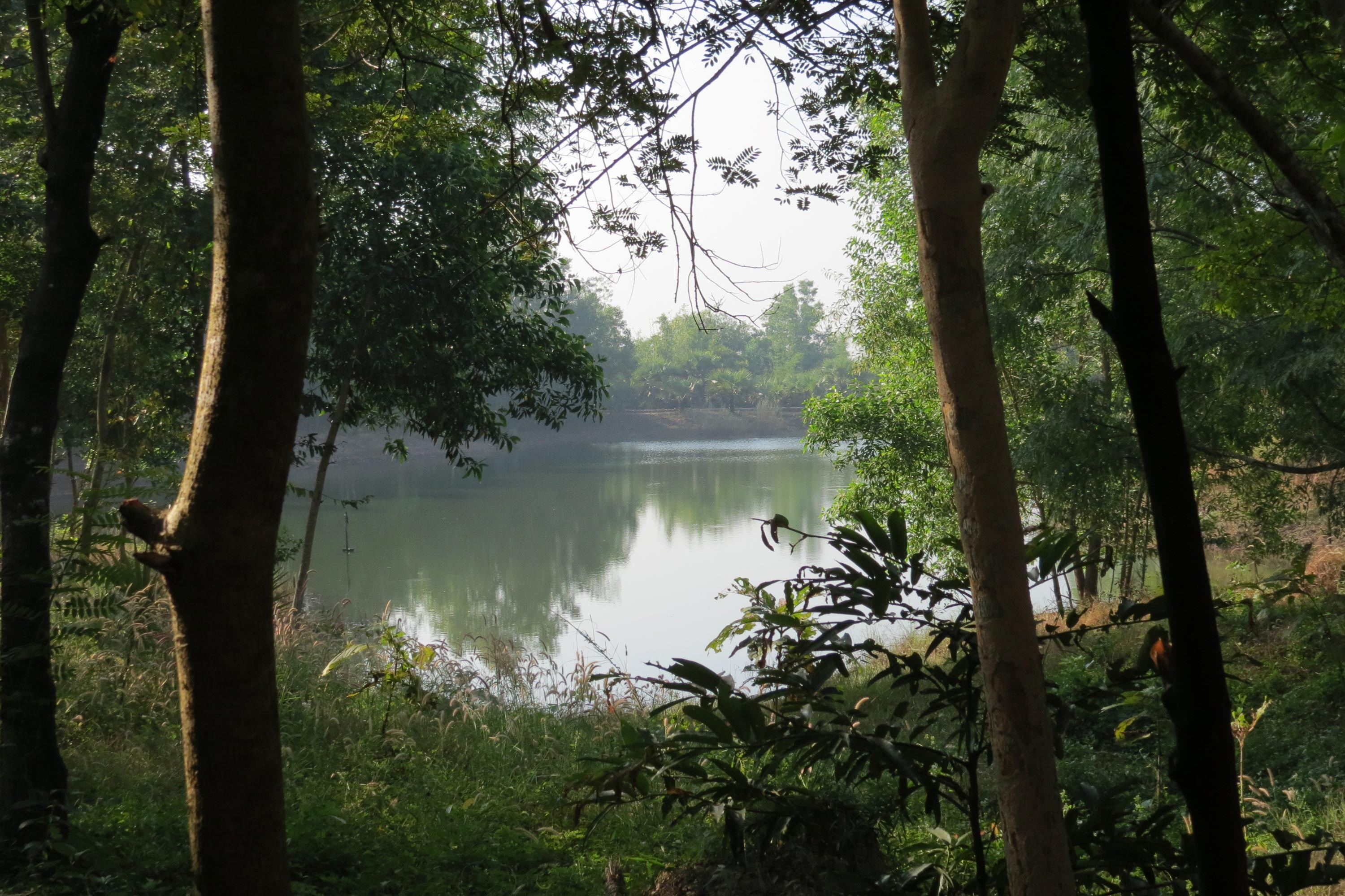 A scenic view of Panditarama Forest Center