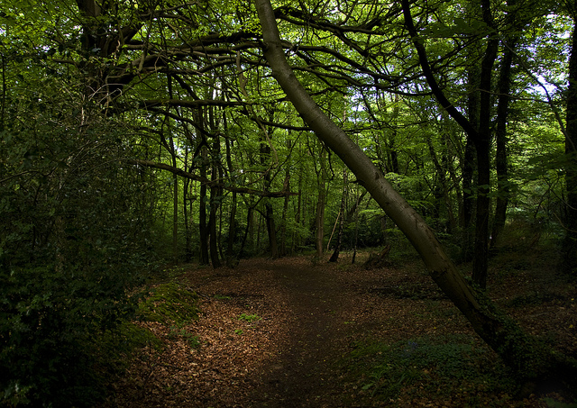 Kent woods,Bromley, UK. Photograph by Malcolm Browne via Flickr