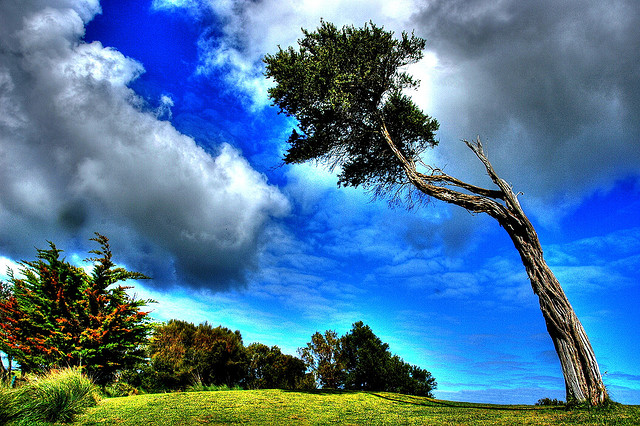 Reach for the Sky...A photograph taken in Melbourne during 2006. Photo by Alan Lam via Flickr